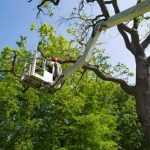 Tree Service Phoenix | Importance of Hiring