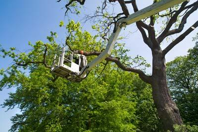Tree Service Phoenix
